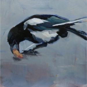 a magpie digs in the ground and finds a peanut